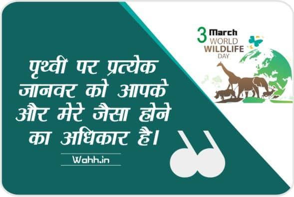 Best Wildlife Conservation Slogans & Sayings