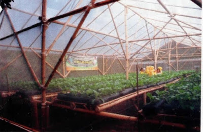 KRPL bibit sayuran