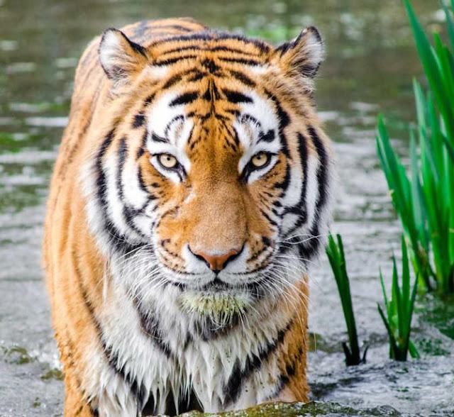 الحيوانات التي تقتل أكبر عدد من البشر