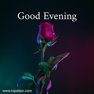 good evening images flowers with love