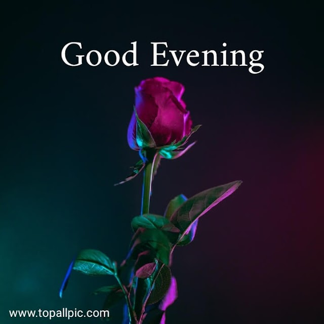 100+ Best Good Evening Messages, Wishes, Quotes With Images 2020
