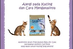 Alergi Kucing Gejala, Penyebab, Cara Mengobati Telengkap
