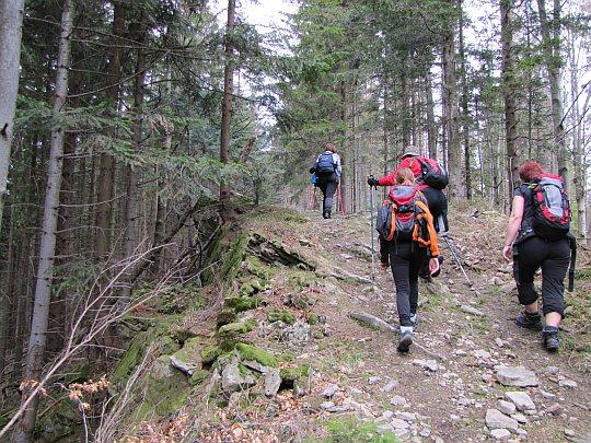 Podejście na Beskid Korbielowski (słow. Westka, 954 m n.p.m.)