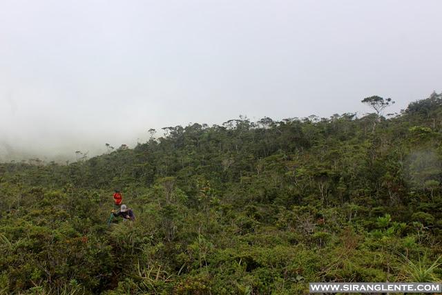 Mt. Hamiguitan Pygmy Forest