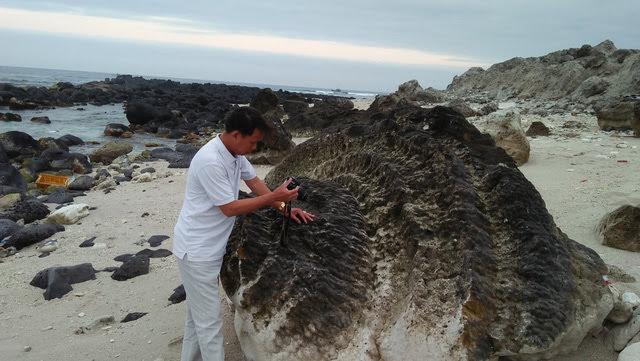 Một số khối san hô có hình xoắn ốc và nhiều hình thù độc đáo khác