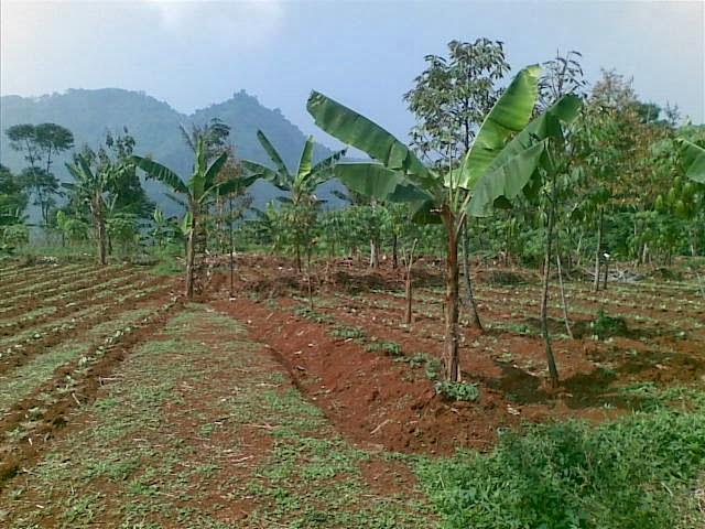 Foto(5088) Jual Tanah | Tanah Di jual, luas 4,25 ha kebun jual tanah di puncak