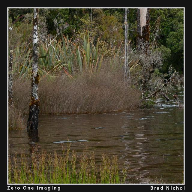 6mp Canon DSLR, Super Resolution test, pond photo in NZ, crop