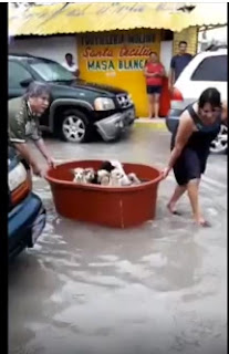 Couple rescues doggies after dropping 'everything' to Hanna flooding in Mexico