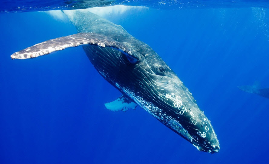 Welcome to the Blue Whale World