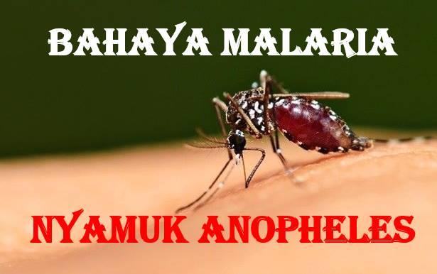 Bahaya Penyakit Malaria Gejala Tanda Tandanya dan Cara Pencegahannya