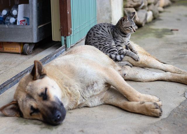 Why Do I Need A Pet Insurance Plan?