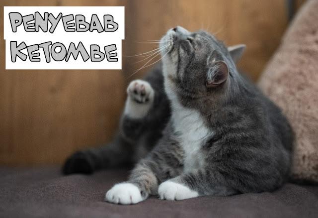 Jenis Jamur pada Kucing
