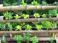 Cara Jitu Budidaya Tanaman dengan Media Bambu yang Hemat dan Benar