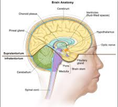 Brain Tumor Cancer Types In addition to Treatment plans