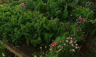 Adam and his Organic self sufficient Garden