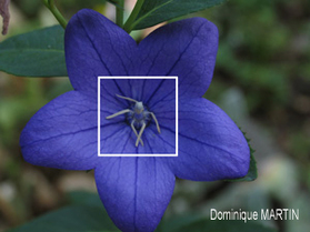 https://emanants.blogspot.com/2019/11/les-esprits-des-fleurs-les-plantes.html