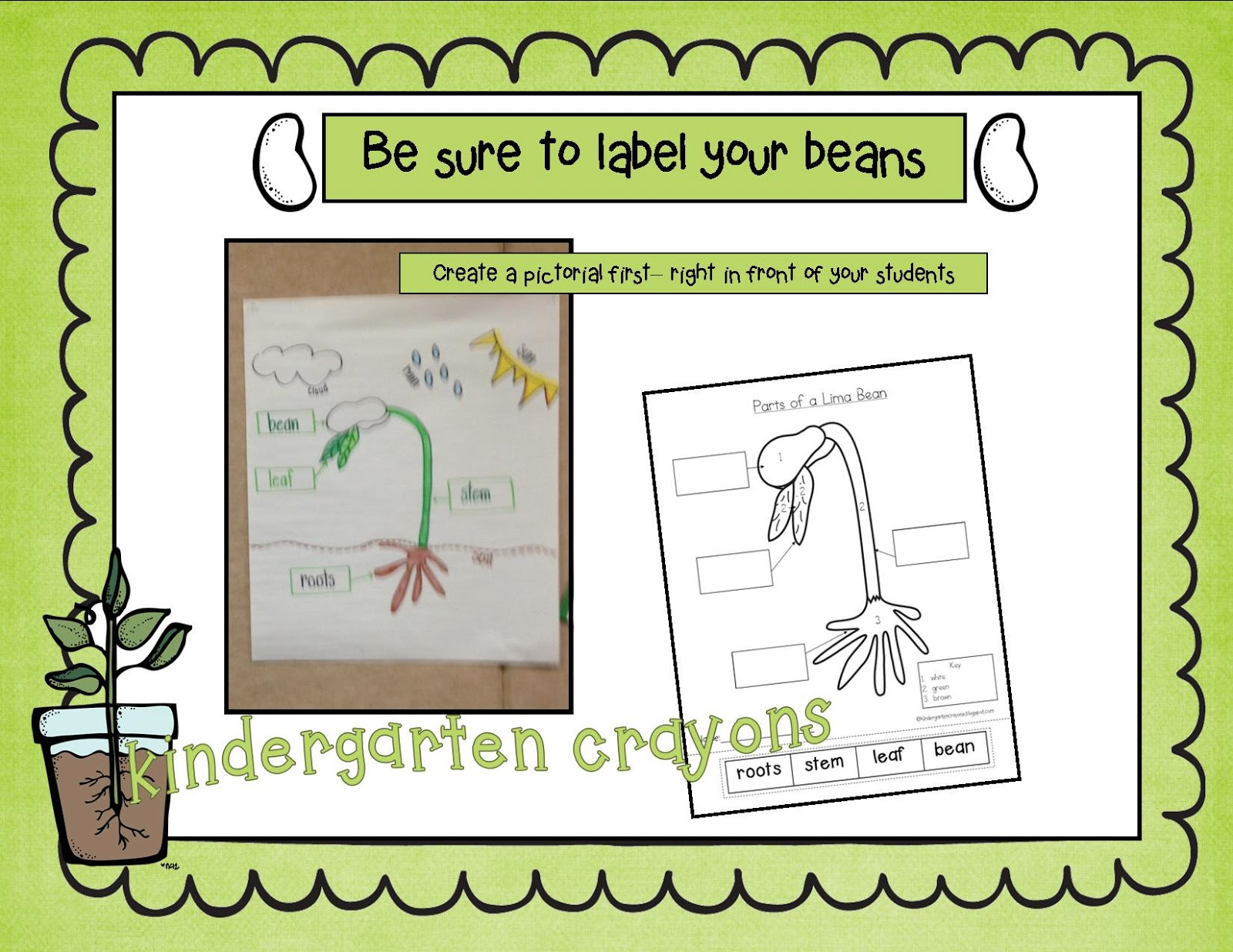 Lima Bean Diagram To Label 97 S10 Radio Wiring Kindergarten Crayons Please Your Parts A