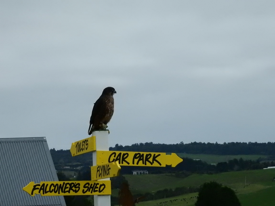 wingspan, NZ