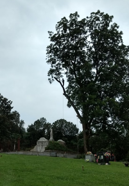Western Kentucky Genealogy Blog