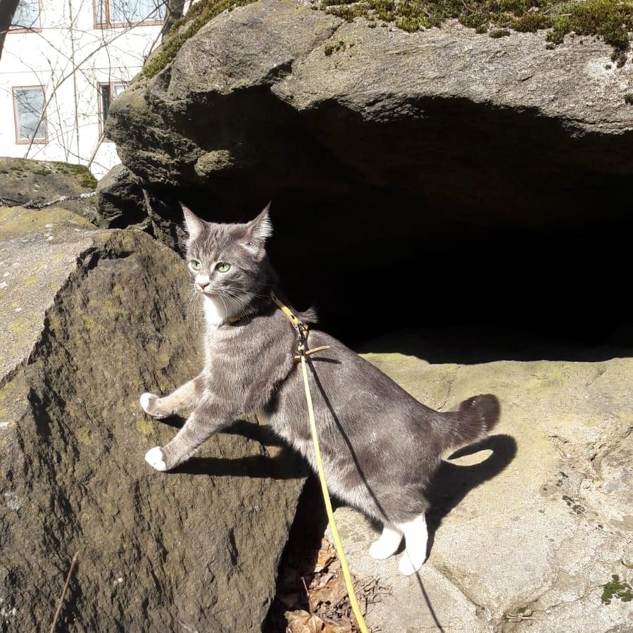 Kissa Herpes