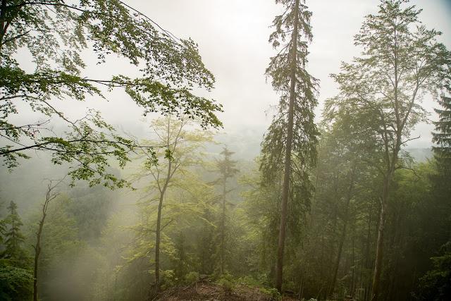Strumbergspitze und Metzgersteig Wanderung Faistenau – Ebenau  Wandern FuschlseeRegion 05