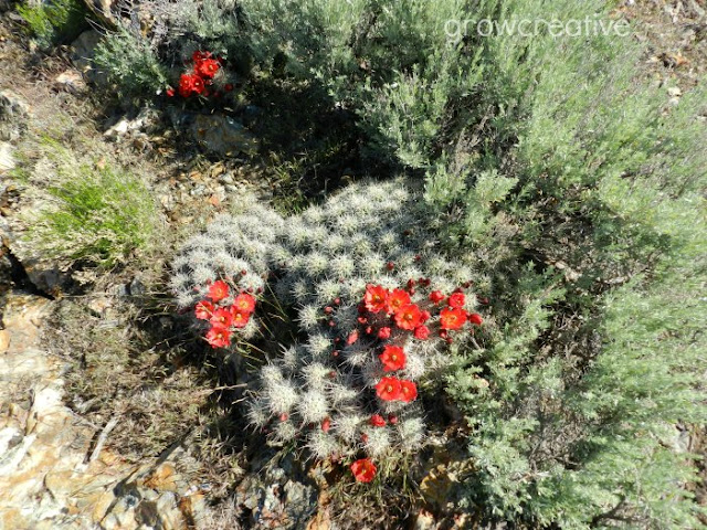 Red Cactus Blossoms: growcreativeblog