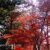 3 Places to Visit in Seoul During Autumn