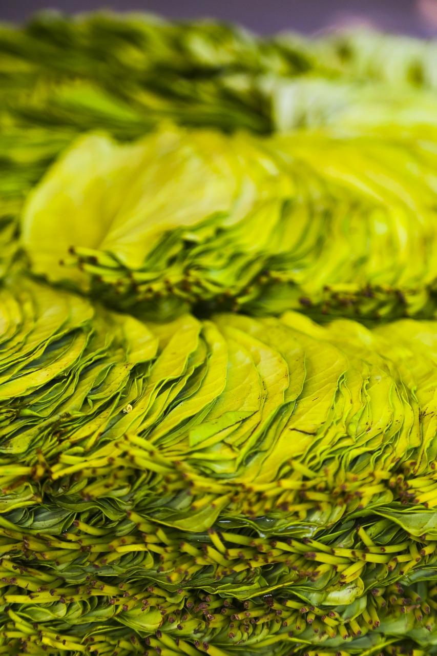 Benefits of betel leaf पान के पत्ते के फायदे