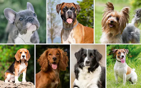 Kinds of dogs and their names