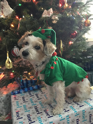 The Writer's Pet: Maureen Fergus on her dog Buddy, pictured here dressed as an elf, and her latest picture book