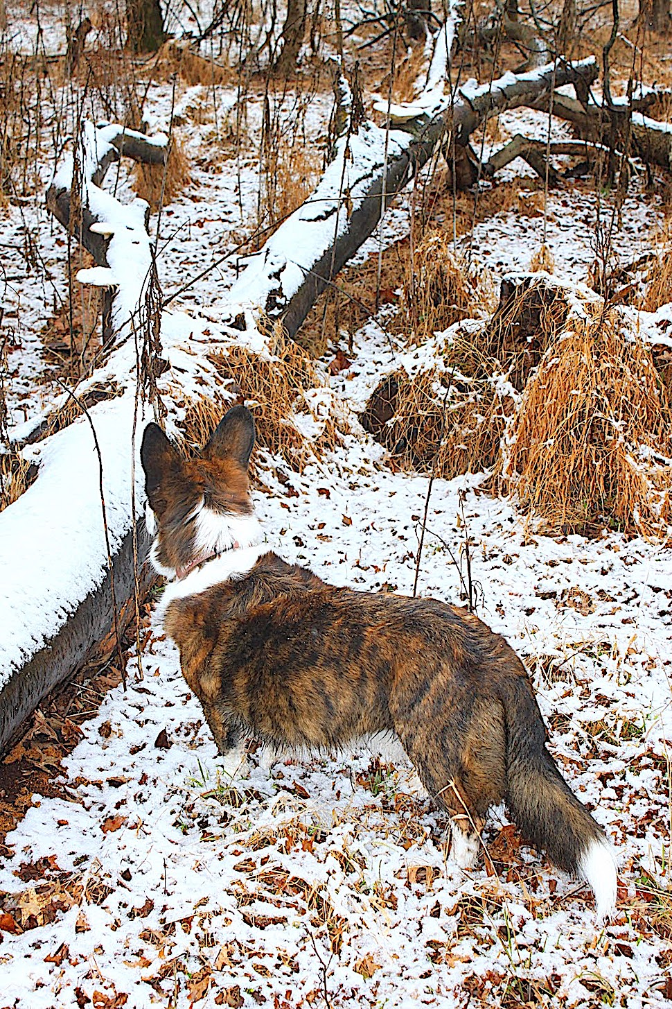 a painting by Bev Doolittle of a dog in winter