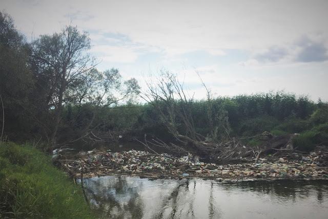 Poluare pe Olt in dreptul localitatii Dobolii de Jos, Covasna