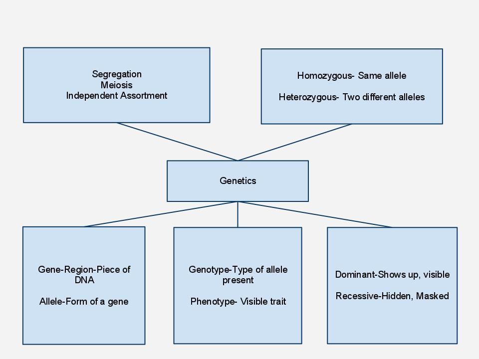 Thematic essay graphic organizer us history