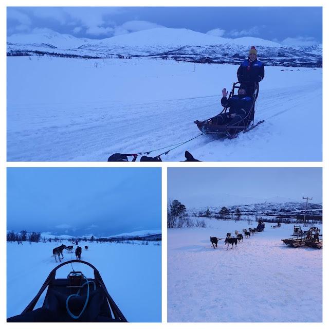 Psi zaprzęg w Tromso