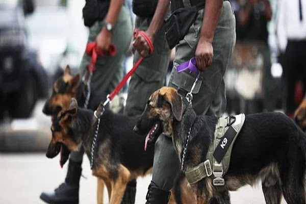 Nigeria to begin use of dogs to detect covid-19 patients