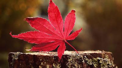 Yaprak Duvar Kağıdı