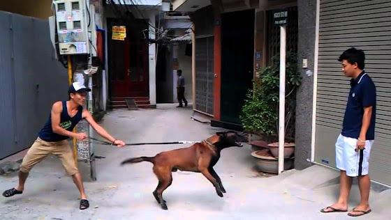 Cách thoát nạn bằng chai nhựa, giày dép khi bị chó tấn công