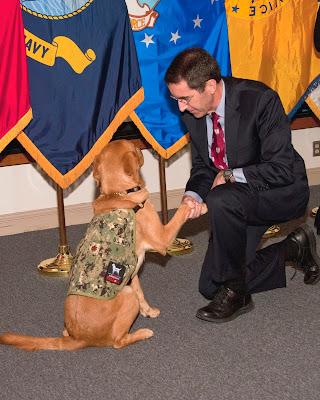 Man shakes dog's paw.