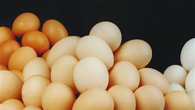 صفعة كل موسم.. أسعار البيض تنهار والتخلص من القطعان هو الحل