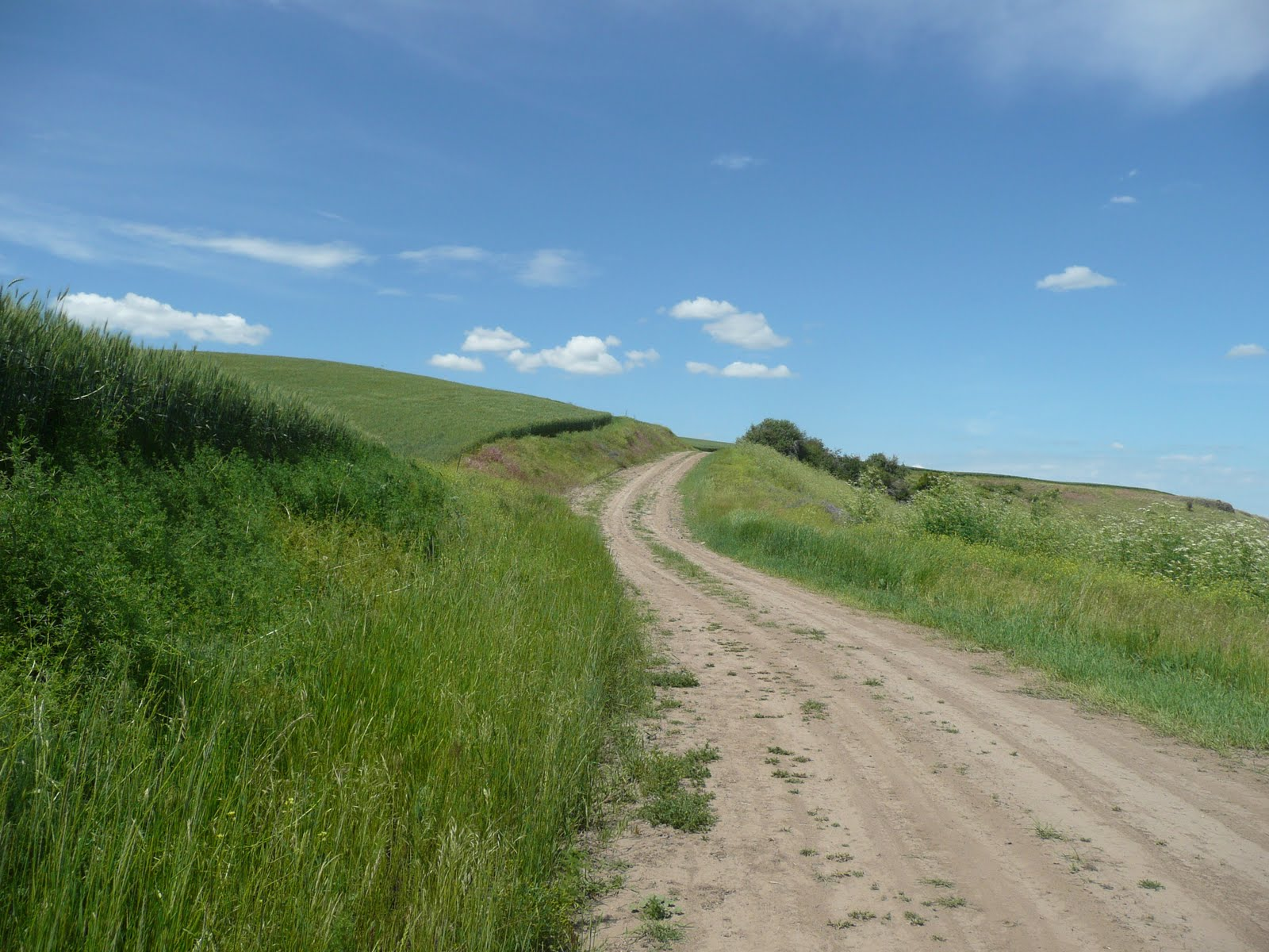 Catherine Ensley ...: The Long and Winding Road
