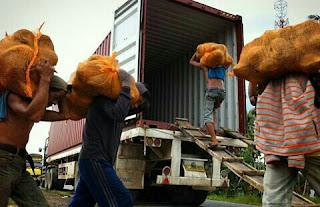 kelapa export dari indonesia ke china