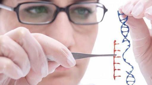 Tıbbi Biyoloji Nedir? Nasıl Tıbbi Biyolog Olunur? Tıbbi Biyologlar Ne İş Yapar? | Biyoloji Bölümü