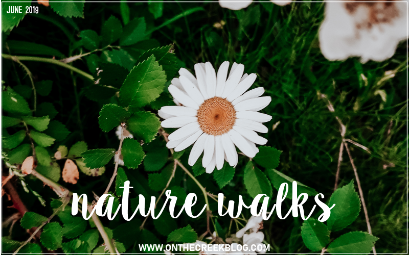Photos from our nature walks!