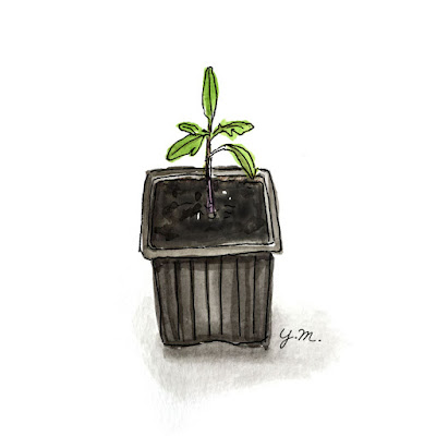 seedling by Yukié Matsushita