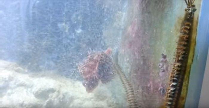 2 Tahun Tak Bersihkan Akuarium, Pria ini Dapati Hewan Mengerikan di Dalamnya. Youtube/Gurutek