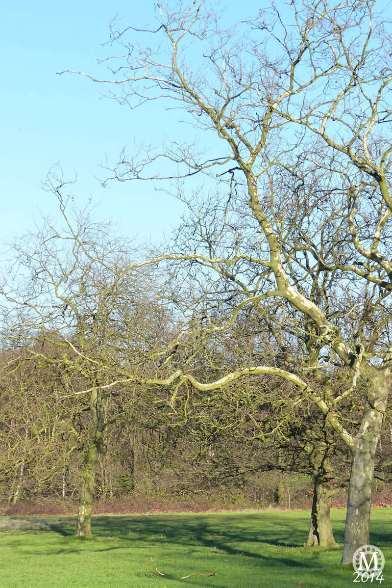 Things To Do For Free In Essex: Hainault Forest Country Park