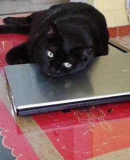 cat+black+strillointhebox