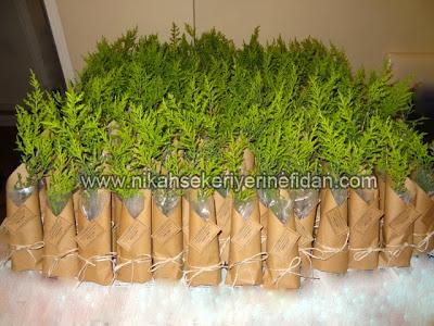 nikah fidanı nikah bitkisi fiyatları 5