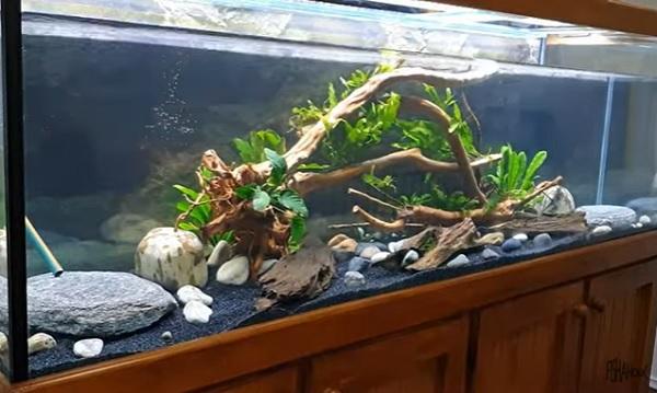 Oscar Fish Tank Aquatic Plants