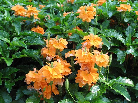 22 jenis tanaman pengisi yang biasa di gunakan pada taman vertikal